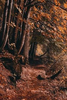 褐色森林土の茶色の木の幹