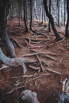 Коричневые стволы деревьев в темном лесу