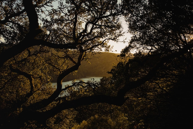 日没時に緑の葉を持つ茶色の木