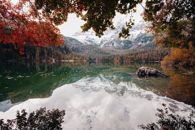 Коричневые деревья возле озера в дневное время