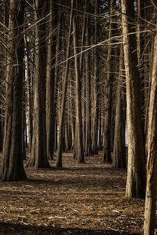 낮 동안 갈색 필드에 갈색 나무