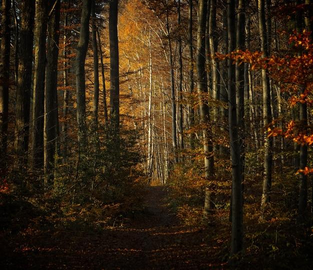 褐色森林土の茶色の木