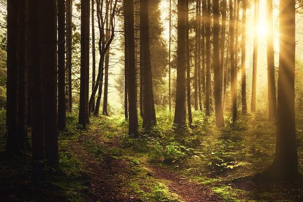 낮 동안 숲에 갈색 나무