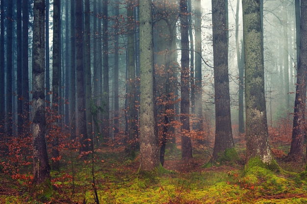 Коричневые деревья на поле зеленой травы
