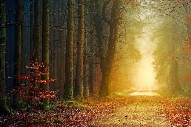 낮 동안 안개와 갈색 나무