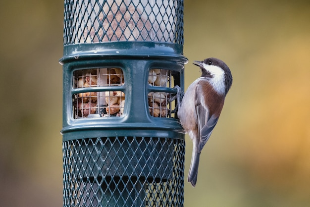 Brown and white bird on black cage