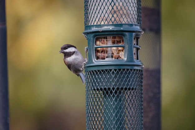 Brown and white bird on blue cage