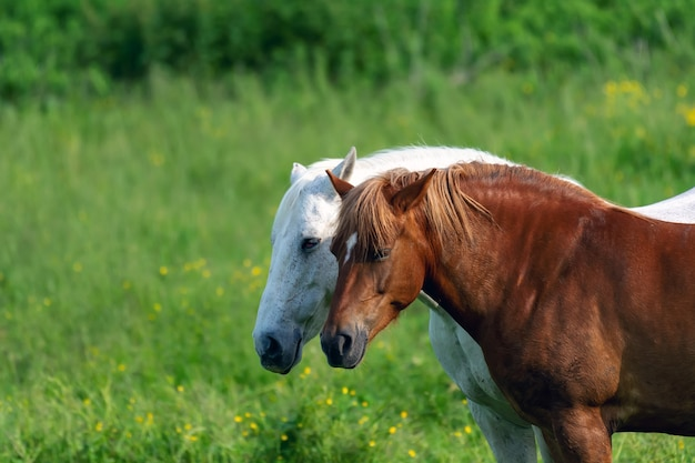 Brown and white horse grazes in the meadow