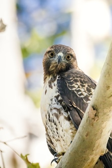 Brown and white owl perched on brown tree branch during daytime Free Photo
