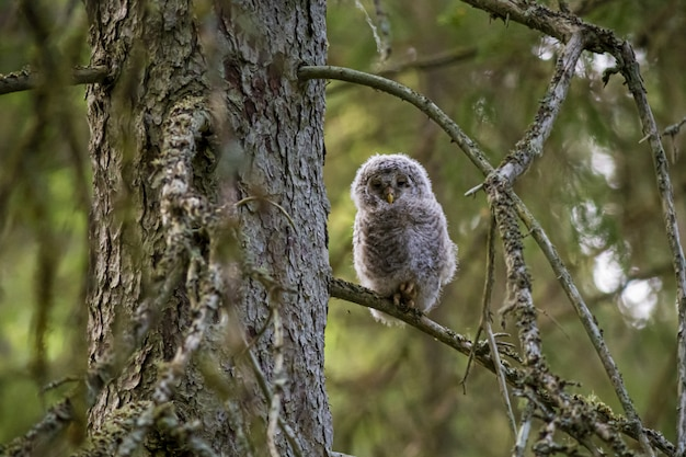 Brown and white owl sitting on tree branch
