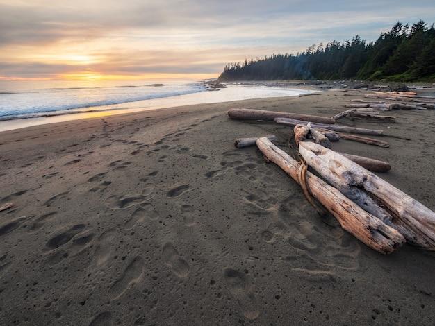 해변에 갈색 나무 로그