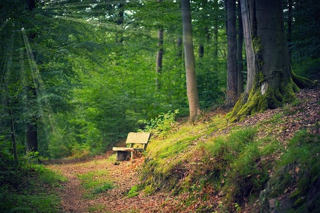 Brown wooden bench on forest during daytime
