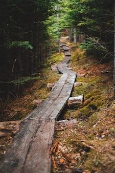낮에는 숲에서 갈색 목조 다리