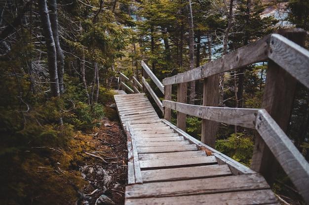 昼間の森の茶色の木製の橋