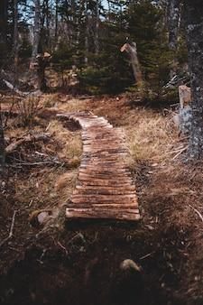 Brown wooden log on brown grass