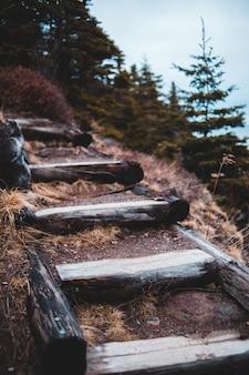 茶色の木製階段
