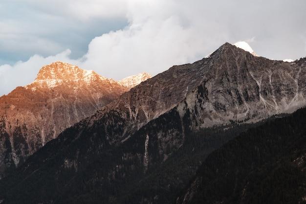 山脈と茶色の木の木