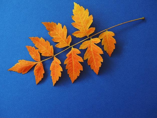 Бранчи из сухих желтых листьев яркий осенний фон