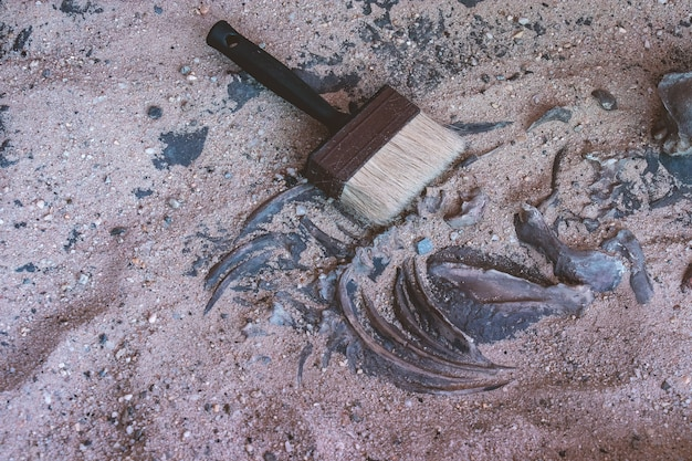 Brush on bone in sand of archaeological excavation site