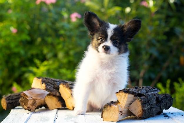 Брутальный портрет щенка