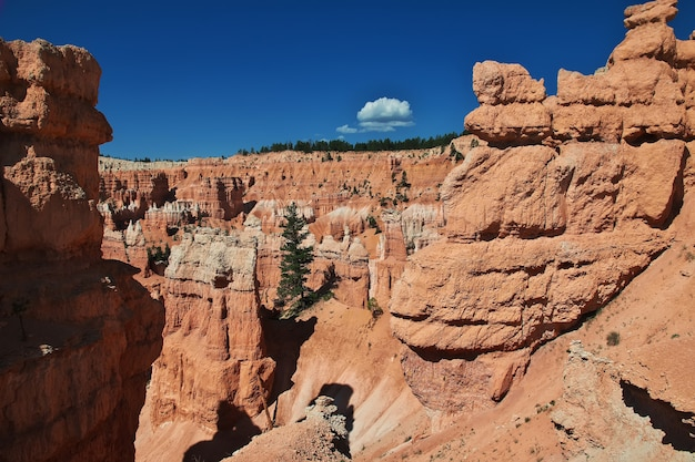 Bryce canyon national park in utah of united states