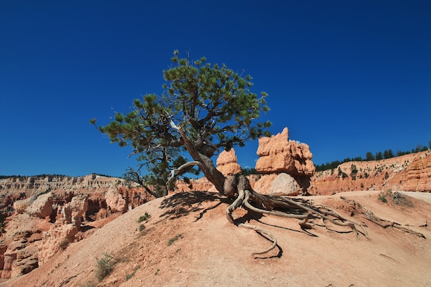 Bryce canyon in utah, usa