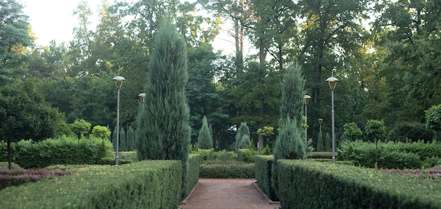 Bucha central park, french style. evergreen plants