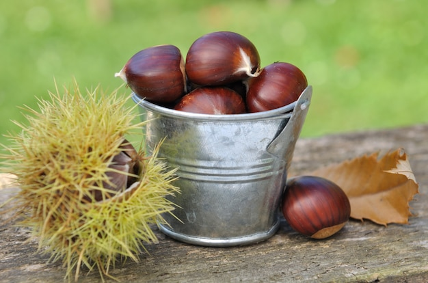 Bucket filled with chestnuts