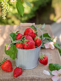 Bucket with strawberries on the nature