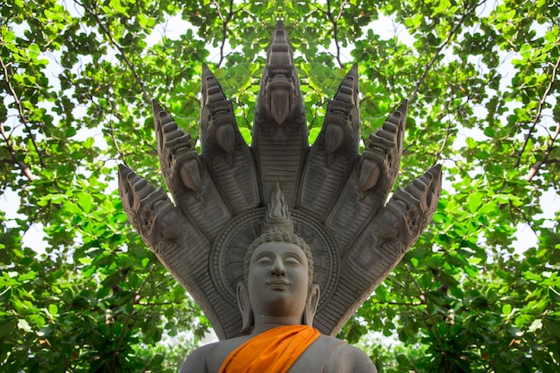 Buddha figure with king cobra gardian