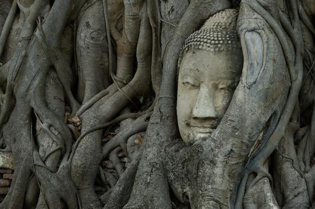 나무에 새겨진 부처님 머리