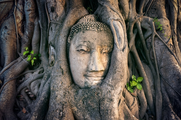 Testa di buddha in albero di fico a wat mahathat, parco storico di ayutthaya, thailandia.