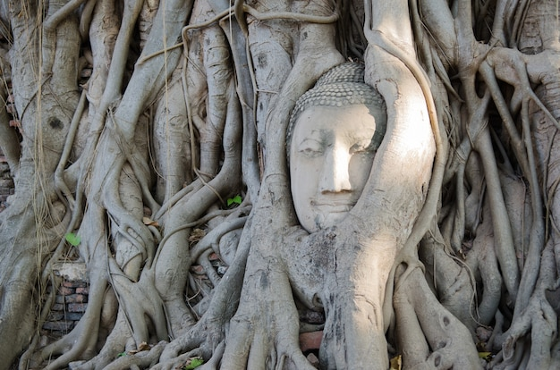 Buddha head overgrown with tree roots in ayutthaya, thailand , wat mahathat