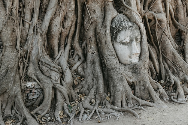 Buddha head in tree roots. wat mahathat ayutthaya. thailand.