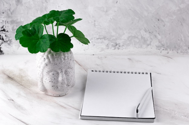 Buddha head vase with green plant and notebook on a marble background