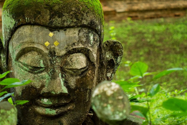 Buddha head in wat umong (buddha park) ,suthep, muang, chiang mai, thailand