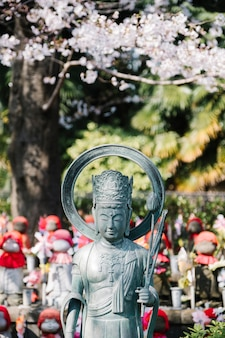 Buddha and sakura in temple of japan