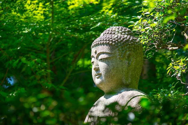 Buddha statue in maple tree from ryoan ji temple, kyoto