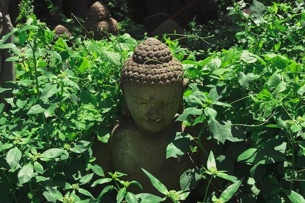 朝の霧と熱帯のジャングルの葉に隠された仏像