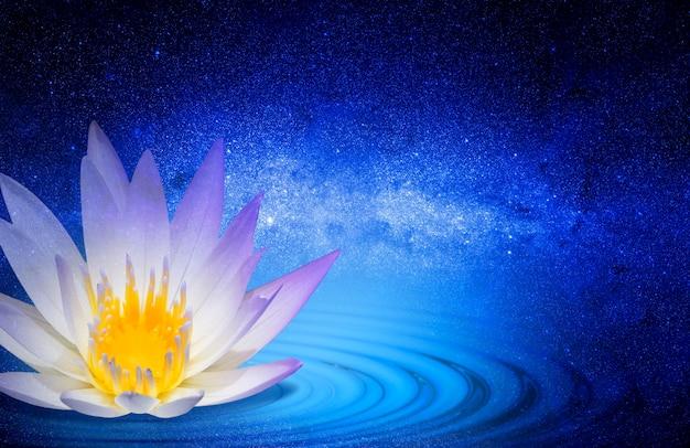 仏教の蓮の花