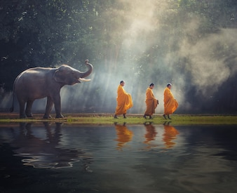 Buddhist monks walk collecting alms is traditional of religion Buddhism on faith Thai peop