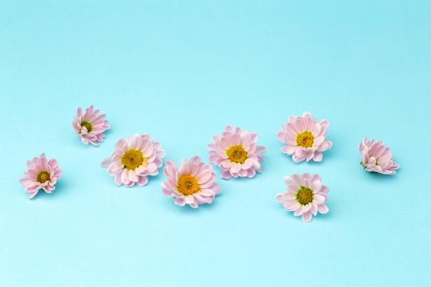 Buds of pink flowers with pink petals on a colored minimal background. floral background concept
