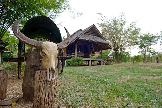 Buffalo bones and hut