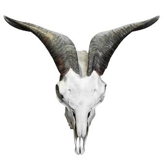클리핑 경로와 흰색 배경에 고립 된 장식 버팔로 두개골