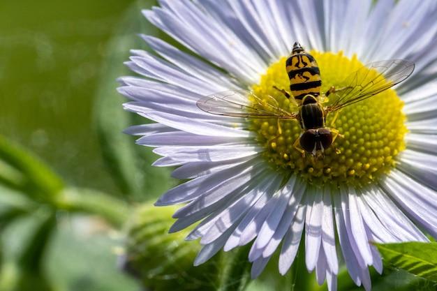 흰색과 노란색 꽃에 버그