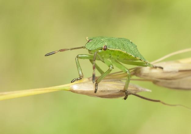 Bug Premium Photo