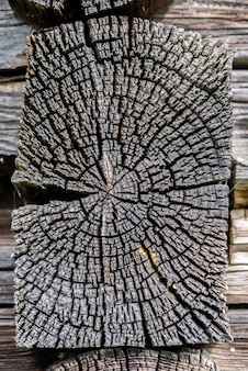 Building detail. section of the old pine tree trunk with annual rings and cracks.
