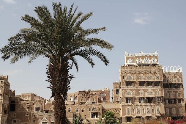 예멘 사나의 낮에 햇빛 아래 야자수로 둘러싸인 건물