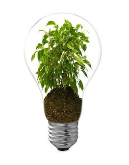 Лампа на белом фоне