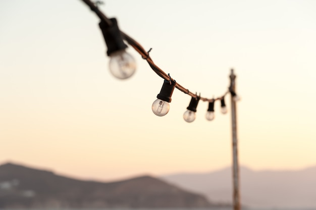 Bulbs in the sunset